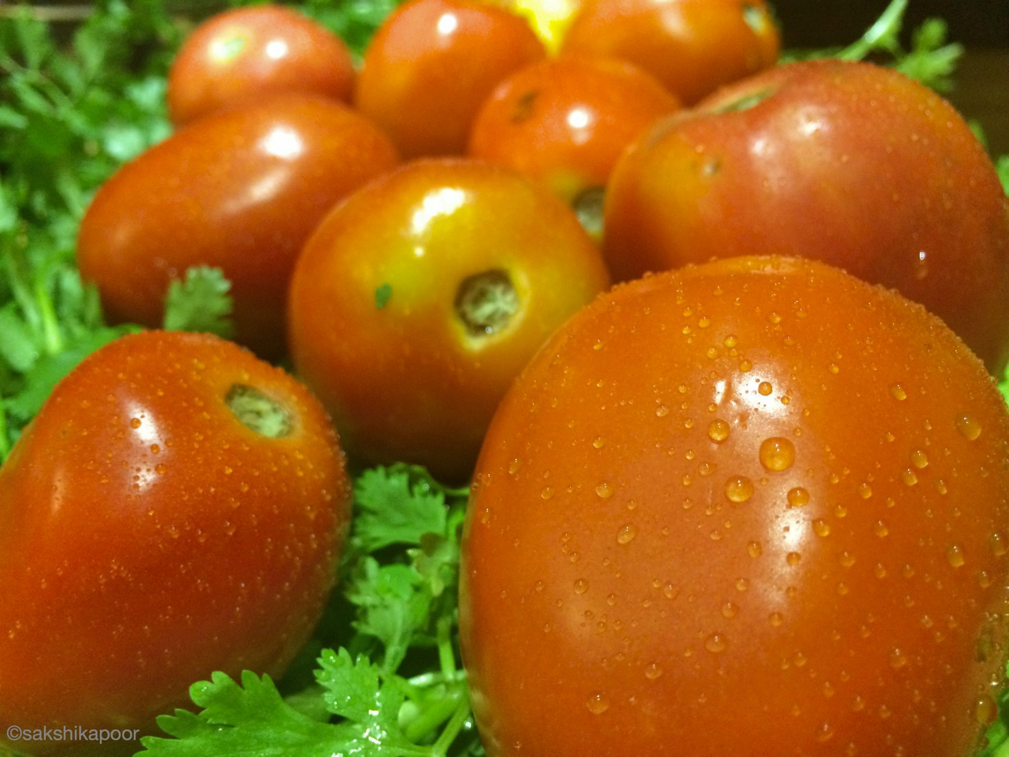 Indian desi tomatoes